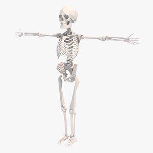 stylized rigged skeleton animation 3d x