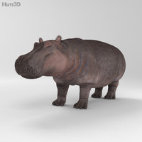 3d model hippopotamus hippo