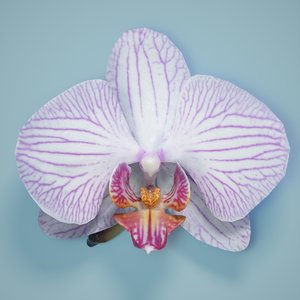 3d model of orchid flower