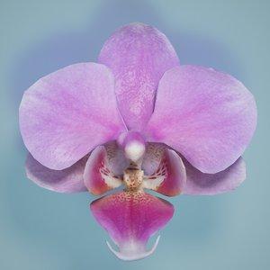 3d obj orchid flower