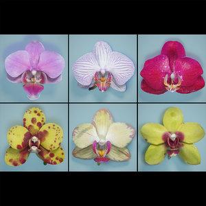 3d model orchid flowers