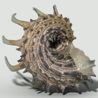 3d model angaria delphinus