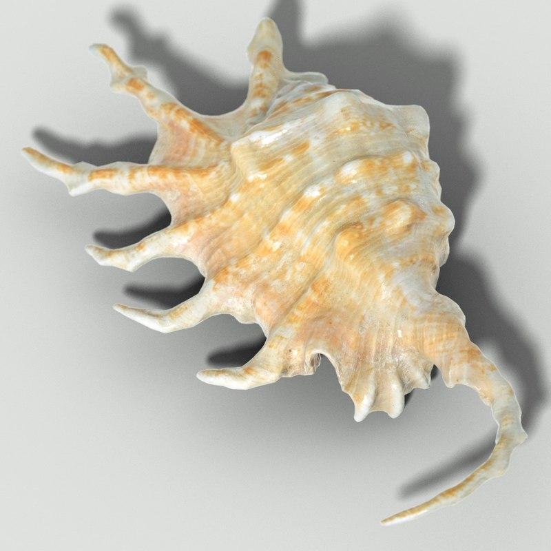 3d lambis scorpius strombidae