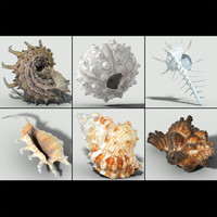 3d model of melanacantha sea shell photorealistic