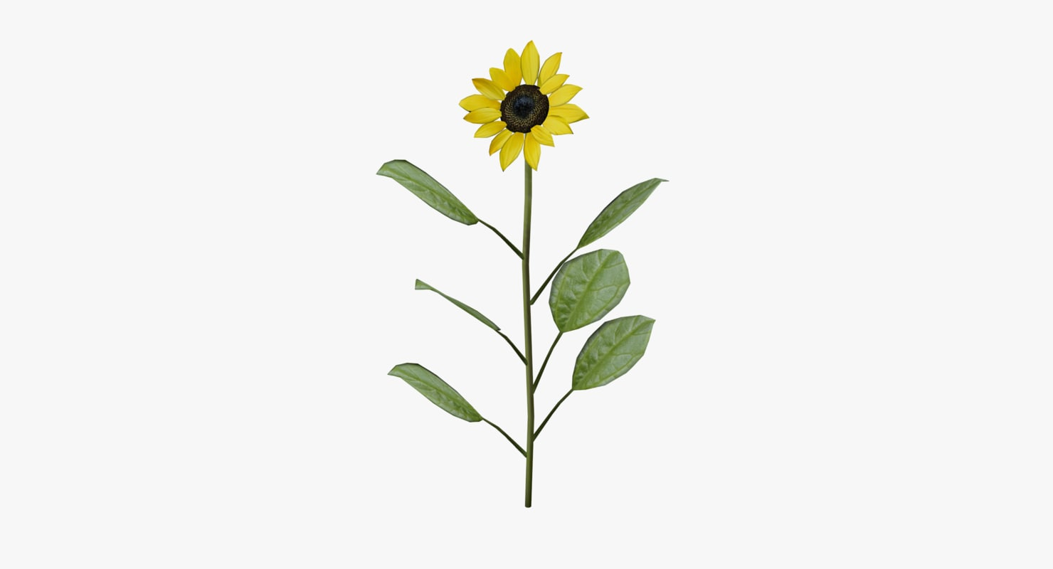 sunflower flower sun 3d max