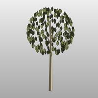 Tree-01127se