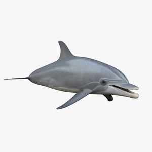 bottlenose dolphin obj