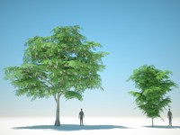 trees arch gpu 3D model