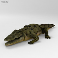 crocodile fauna nature 3d model