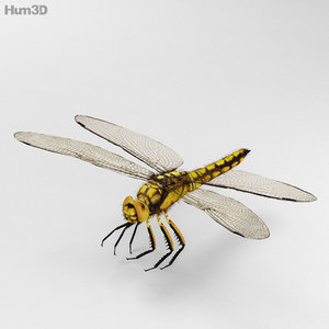 3d model dragonfly fauna insect