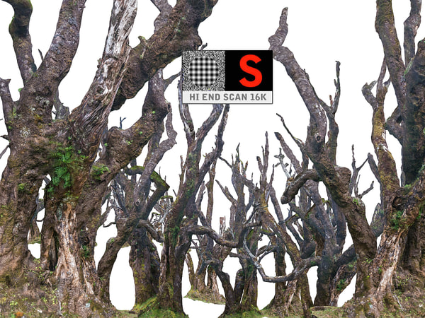 3D scanned laurel forest hd model