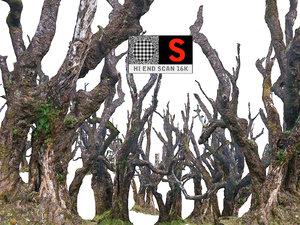 3D scanned laurel forest hd model
