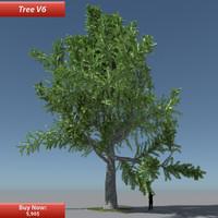 Tree Oak V6