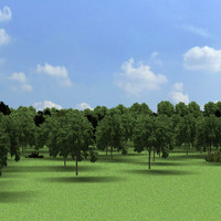 Environment_landscape_forest_01