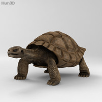 3d galapagos turtle model