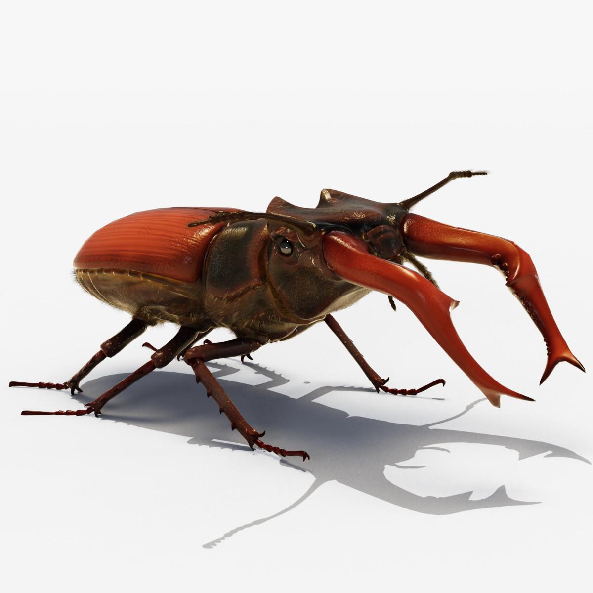 3d lucanus stag beetle cervus model