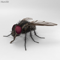 housefly fly house 3ds