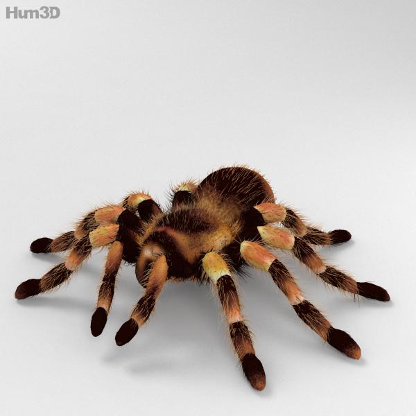 max tarantula animal fauna