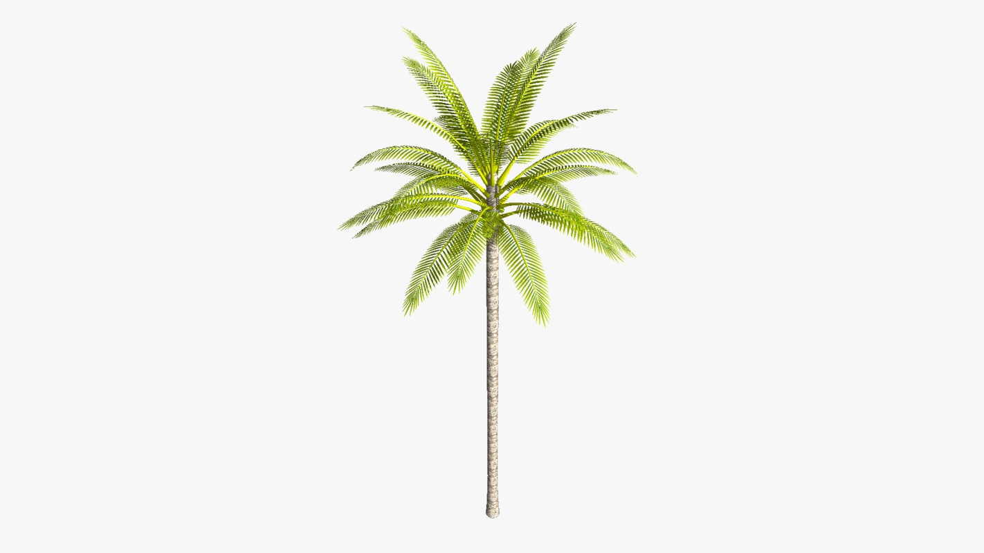 3d coconut palm tree straight model