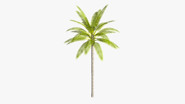 3d coconut palm tree straight model