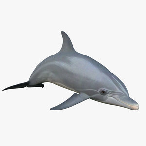3d bottlenose dolphin rigged