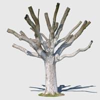 3d photo scanned model