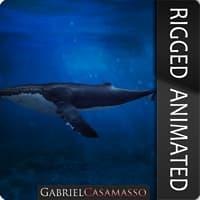 Humpback Whale - Megaptera novaeangliae [RIGGED]