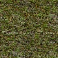 Moss textures