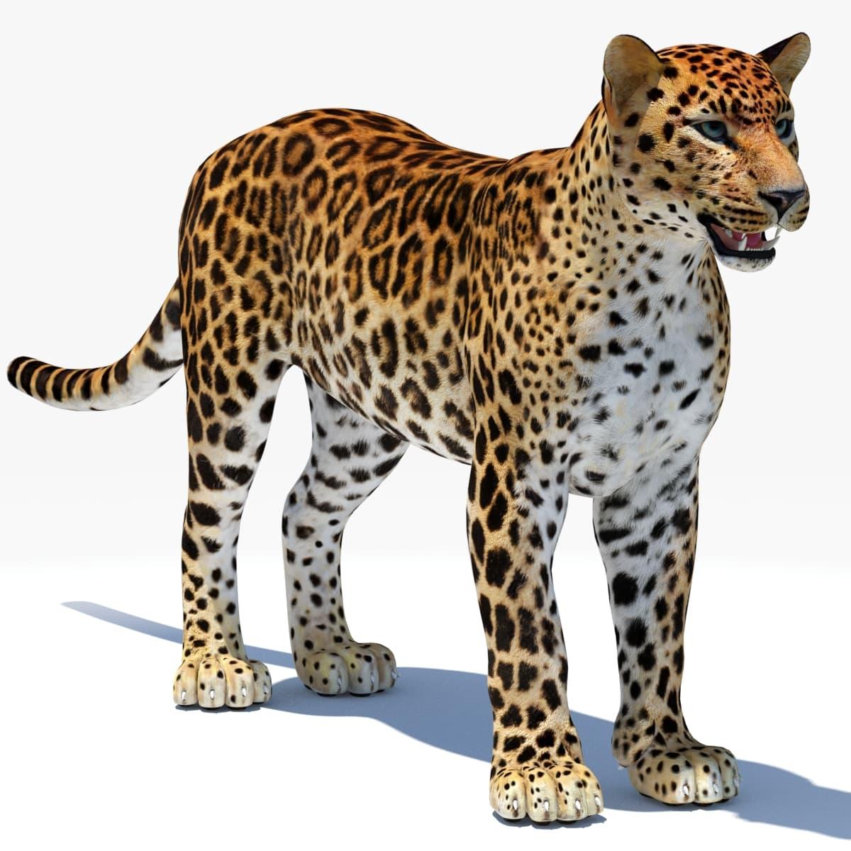 3d model cat feline