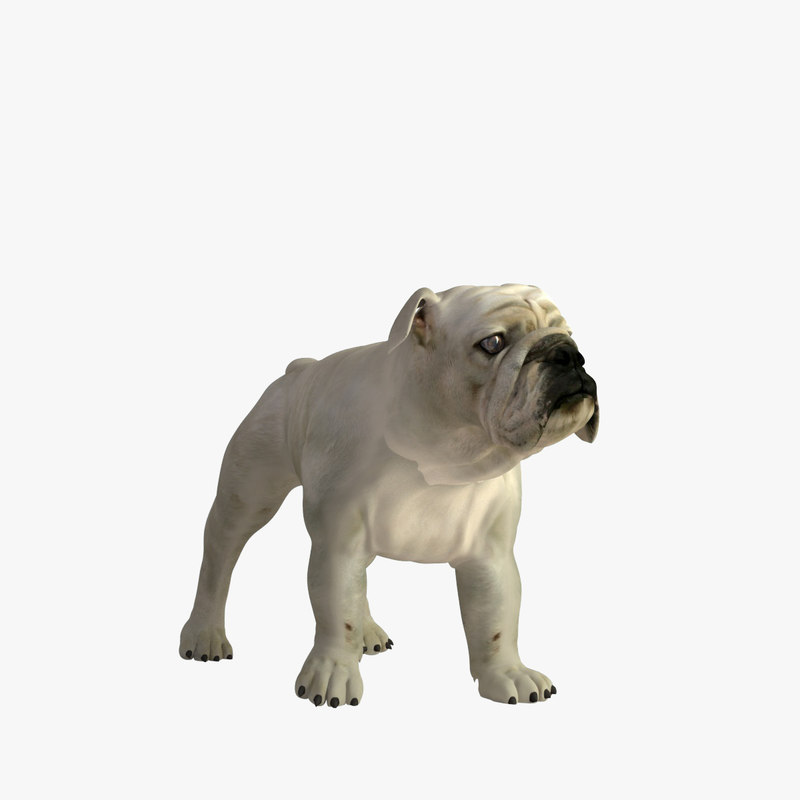realistic bulldog 3d model
