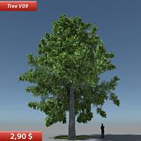 Tree Oak V9