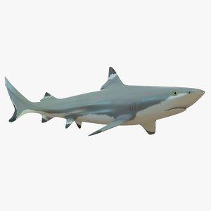 blacktip reef shark 3d model