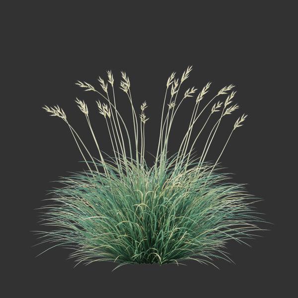 3D model festuca glauca grass