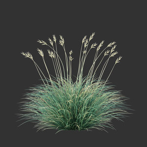 3D model festuca glauca grass