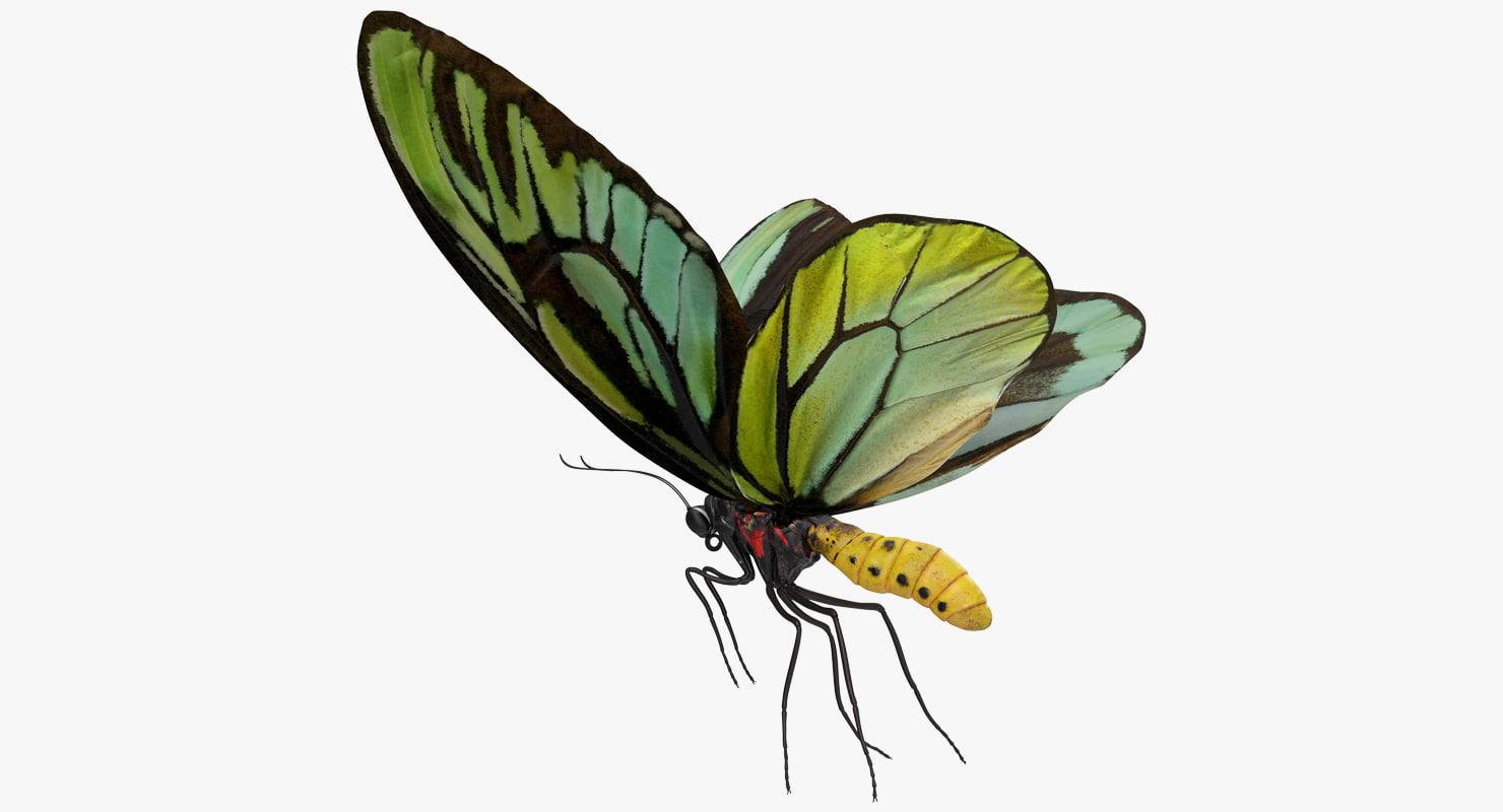 3D model queen alexandras birdwing flying