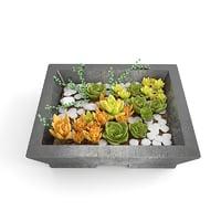 plant succulents 3d obj