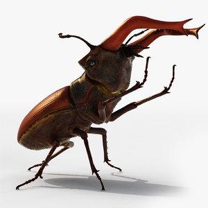 3d model of lucanus stag beetle cervus