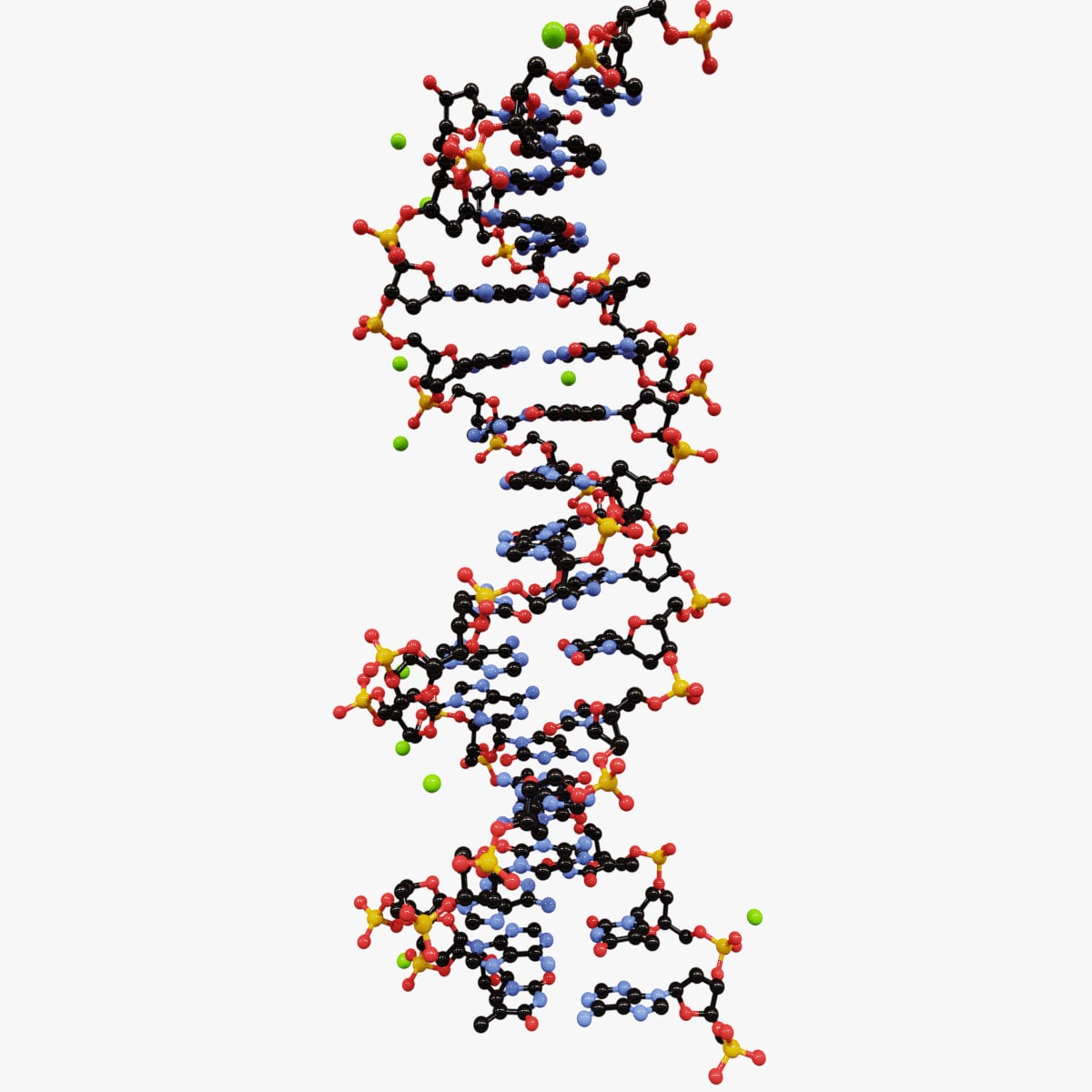 3D model double helix dna molecule