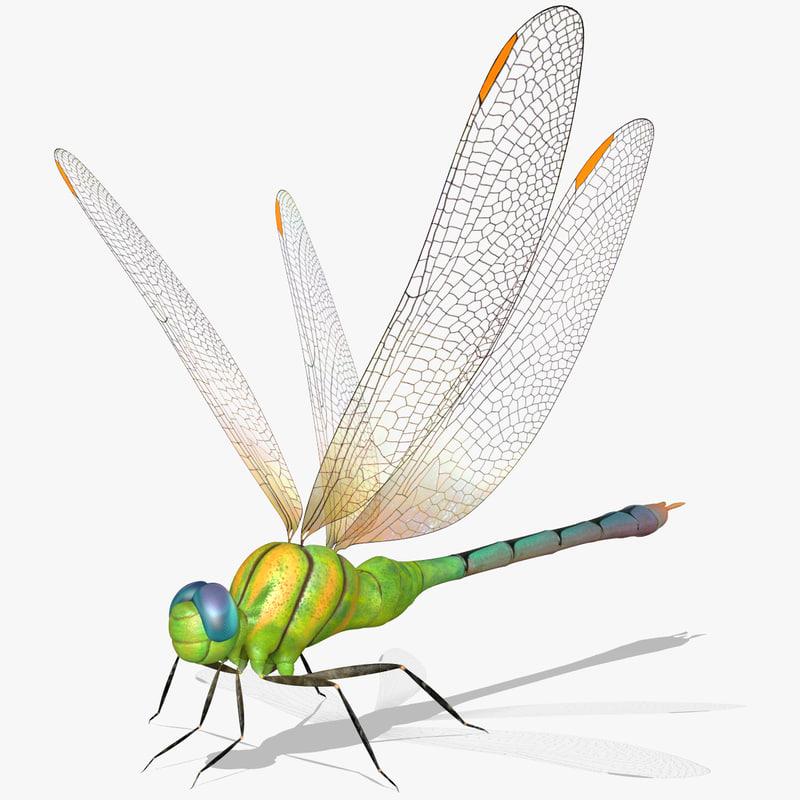 3d dragonfly wings model