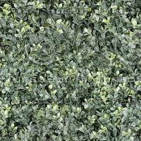 Buxus plant texture (Seamless)