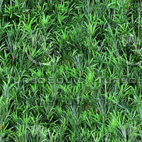 Green Podocarups texture (seamless)