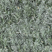 Grey Artemesia texture (Seamless)