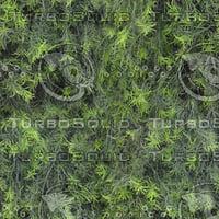 Springeri texture (seamless)