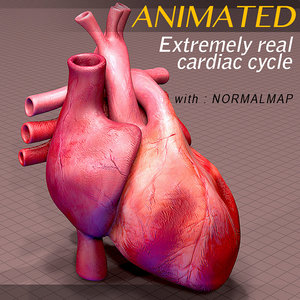 3d heart cycle animation