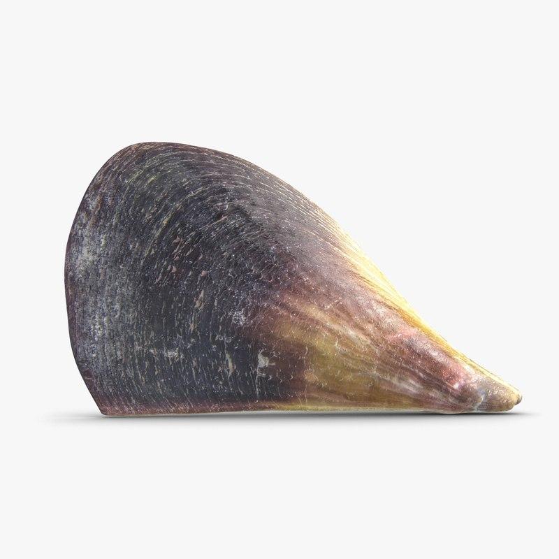 3d model big mussel sea shell