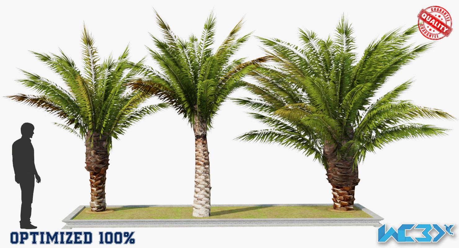 max palm tree set