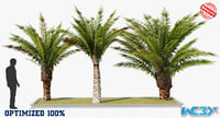 Small Palm Trees Optimized