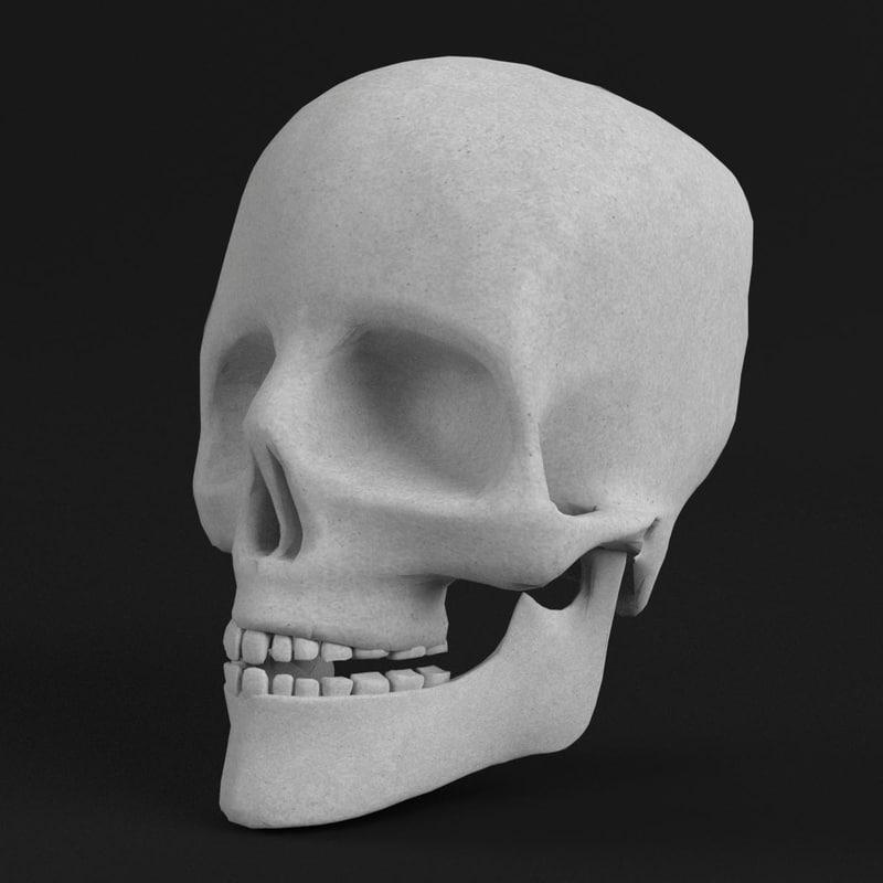 pbr uv-textured human skull 3d model