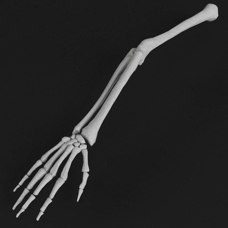 3d model of human hand arm bones