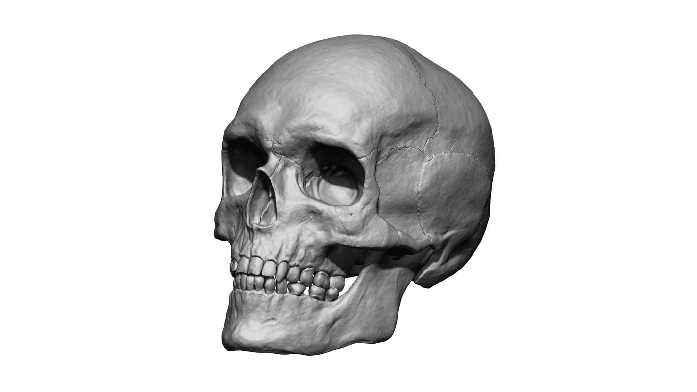 Human Skull Head 3d Model Turbosquid 1176363